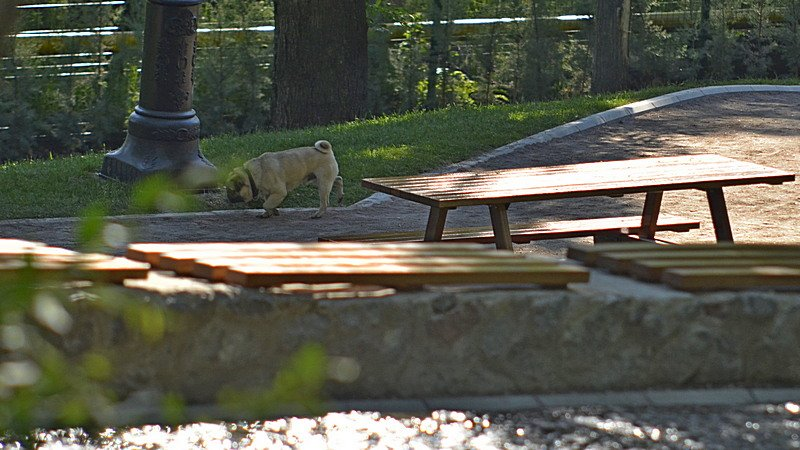 Новый одесский парк облюбовали бескультурные собаководы (ФОТО), фото-3