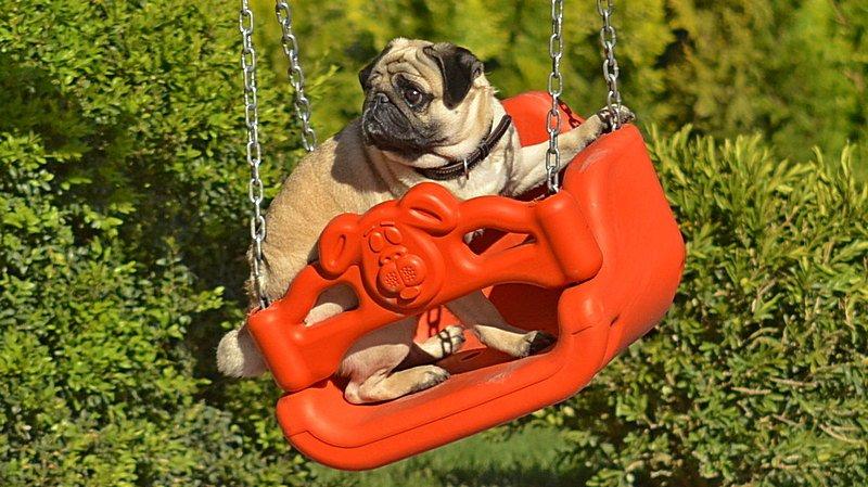 Новый одесский парк облюбовали бескультурные собаководы (ФОТО), фото-12