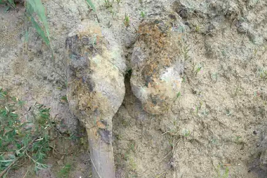 На Харьковщине во дворе частного дома нашли три авиационных снаряда (ФОТО), фото-1