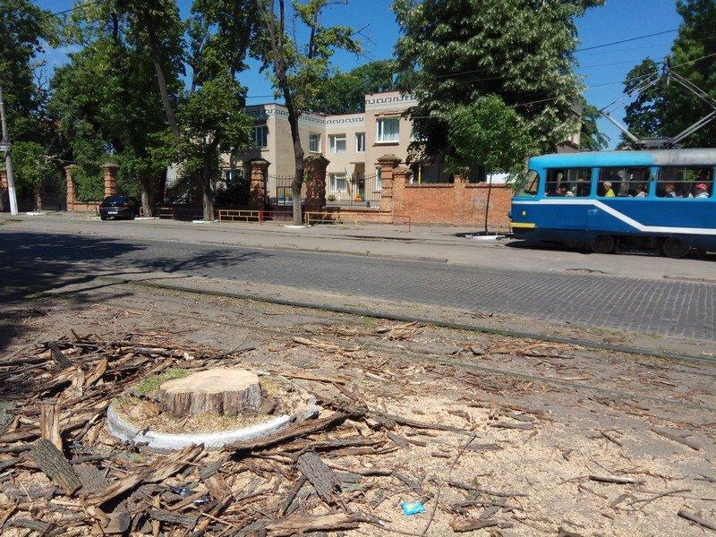 Одесские коммунальщики лишили Французский бульвар деревьев и остановки (ФОТО), фото-7