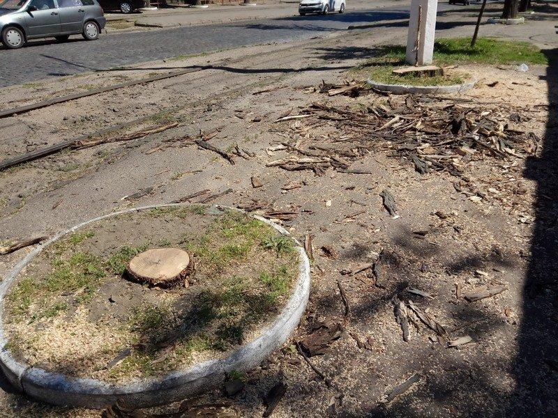 Одесские коммунальщики лишили Французский бульвар деревьев и остановки (ФОТО), фото-10