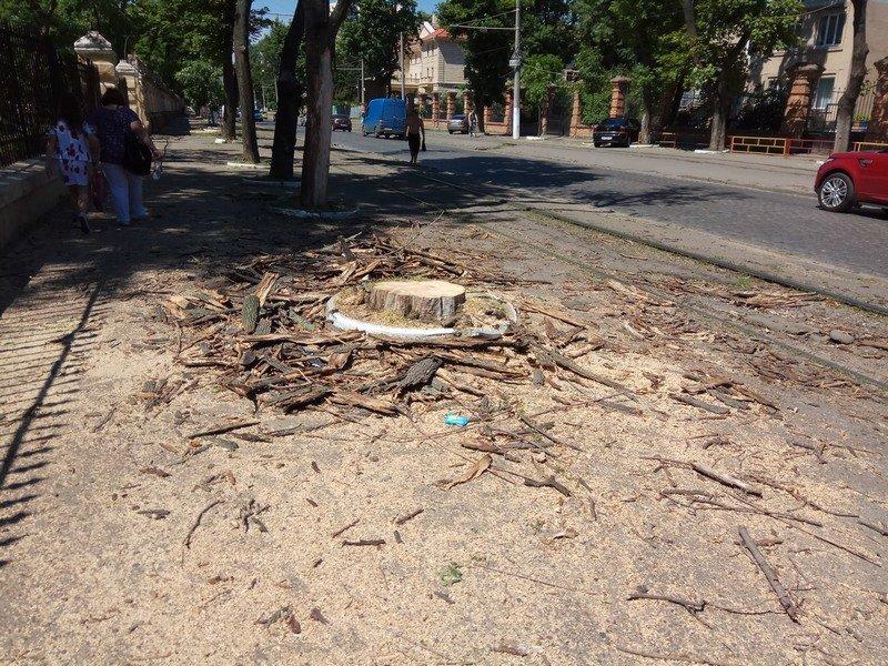 Одесские коммунальщики лишили Французский бульвар деревьев и остановки (ФОТО), фото-5