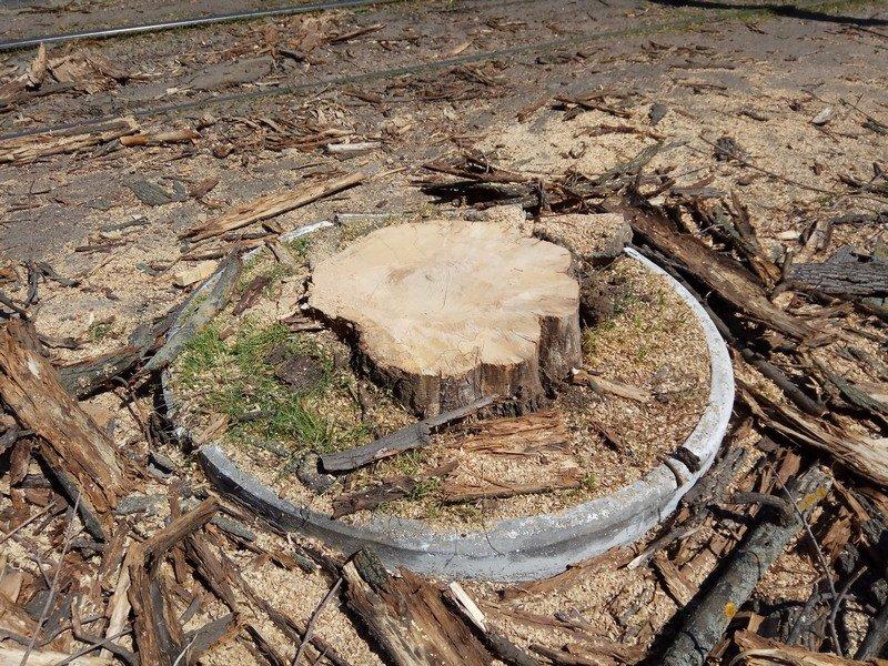 Одесские коммунальщики лишили Французский бульвар деревьев и остановки (ФОТО), фото-6