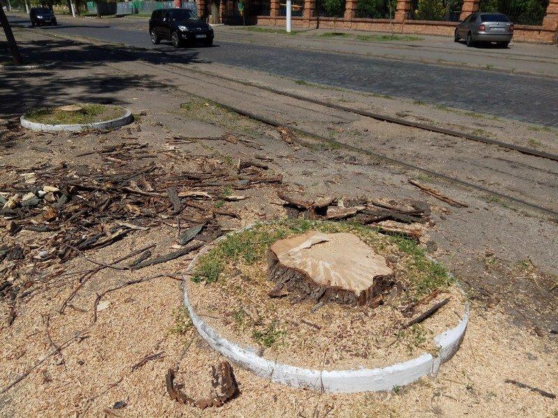 Одесские коммунальщики лишили Французский бульвар деревьев и остановки (ФОТО), фото-9