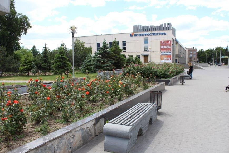 Клумба-тризуб, странный зонтик и засохшие тюльпаны: где в Запорожье высадили тысячи цветов и как это выглядит, - ФОТОРЕПОРТАЖ, фото-2