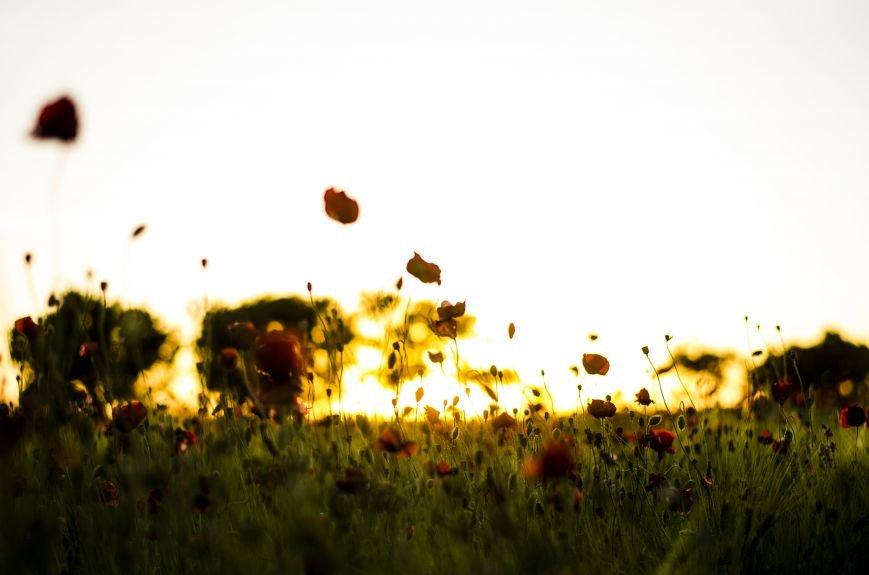 Буйство красок - маковые поля Крыма (ФОТО), фото-6