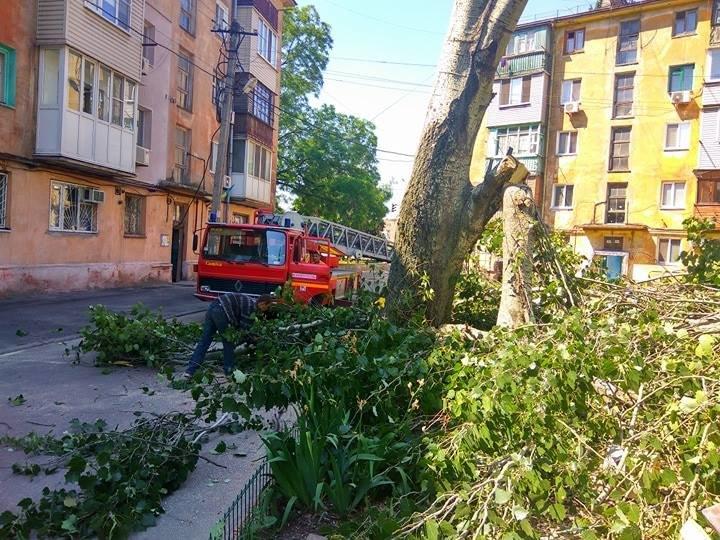 В Мариуполе старый тополь чуть не упал на детскую площадку (ФОТО), фото-1