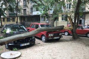 В Запорожской области ветка упала на две машины, - ФОТО, фото-1