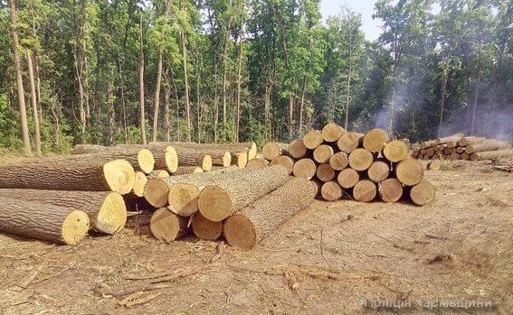 В Змиеве полиция задержала 2 грузовика с ворованной древесиной (ФОТО), фото-1