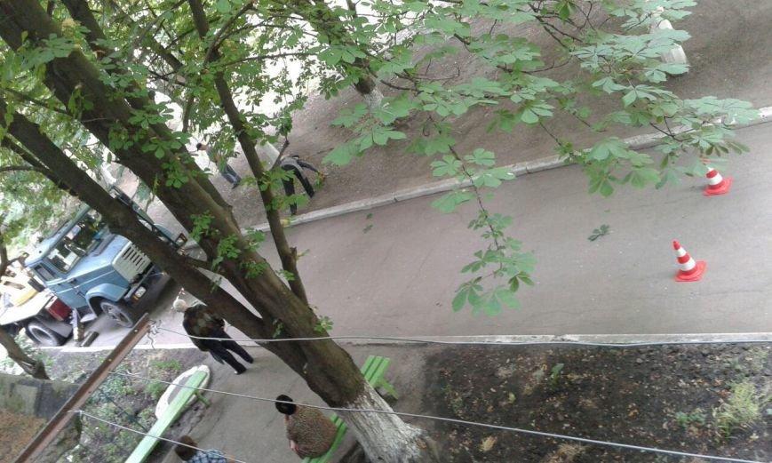 Авдеевские коммунальщики приступили к санитарной обрезке деревьев (ФОТОФАКТ), фото-1