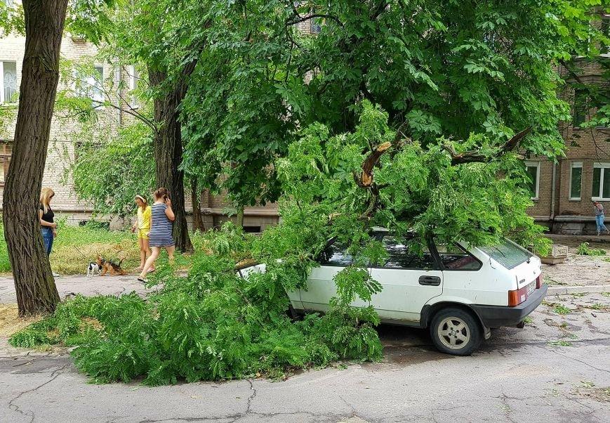 В Запорожье на улице Мира дерево раздавило машину, - ФОТО, фото-1