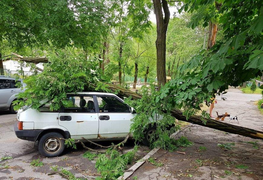 В Запорожье на улице Мира дерево раздавило машину, - ФОТО, фото-2