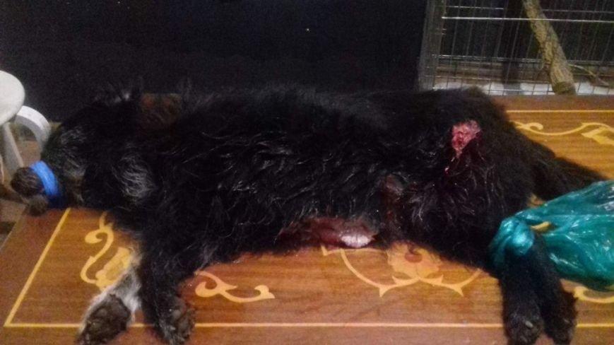 В Шахтах живодер вспорол живот собаке и подвесил ее на ветку умирать, фото-2