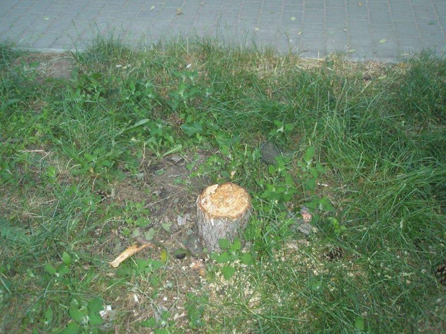 В Одессе коммерсанты ради рекламы спилили дерево, фото-1