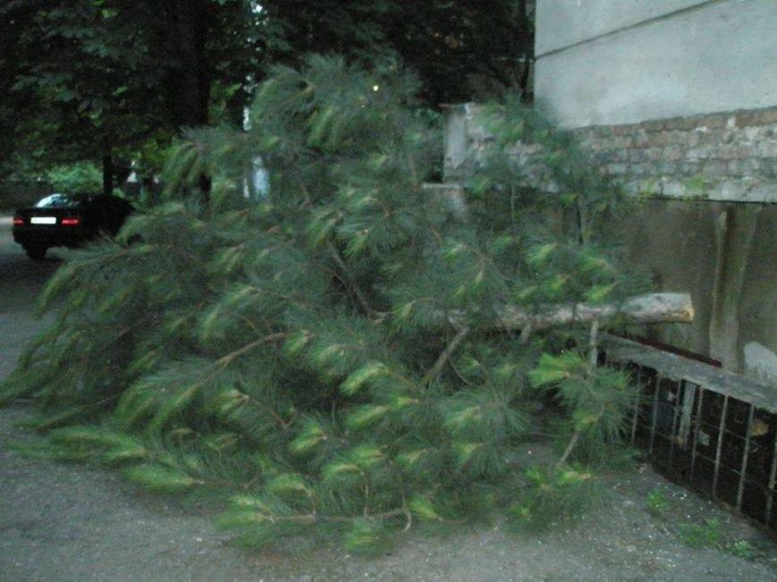 В Одессе коммерсанты ради рекламы спилили дерево, фото-3