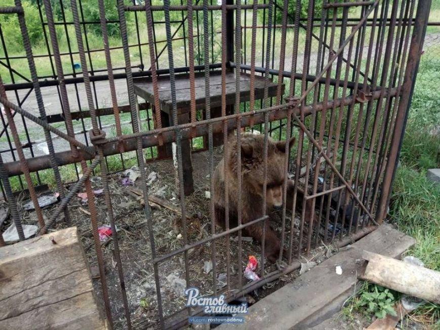 В частном зоопарке в Новошахтинске голодают медведь, козлик, олени и ручная ворона, фото-2