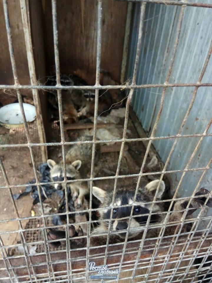 В частном зоопарке в Новошахтинске голодают медведь, козлик, олени и ручная ворона, фото-4