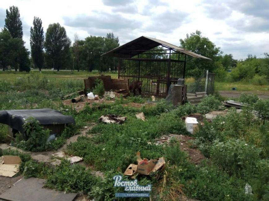 В частном зоопарке в Новошахтинске голодают медведь, козлик, олени и ручная ворона, фото-3