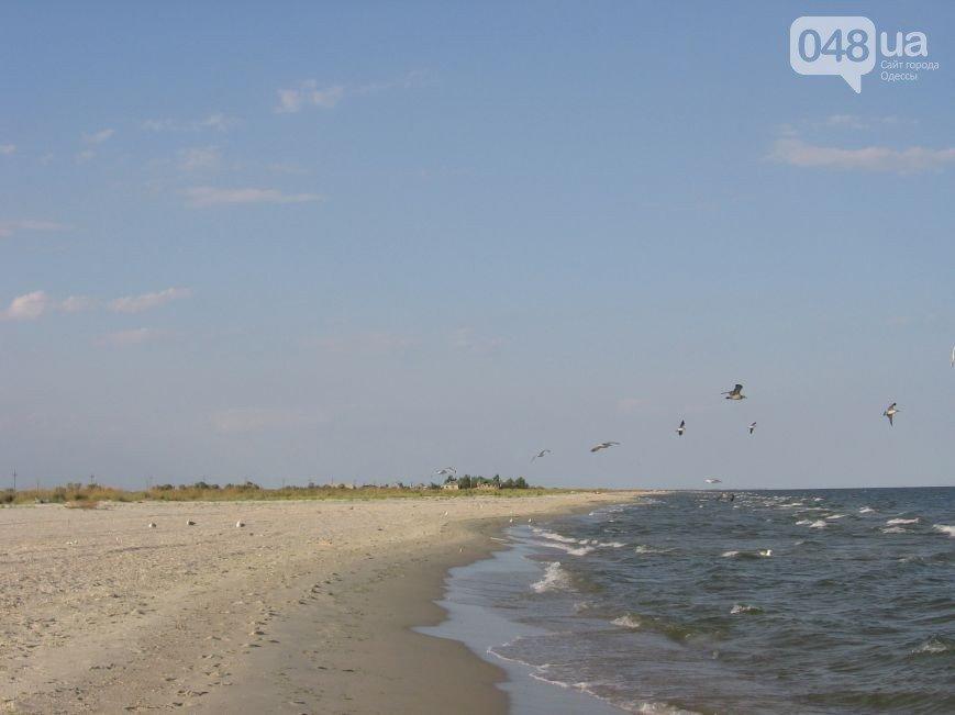 Тет-а-тет с природой: рейтинг лучших диких пляжей вблизи Одессы (ФОТО), фото-7