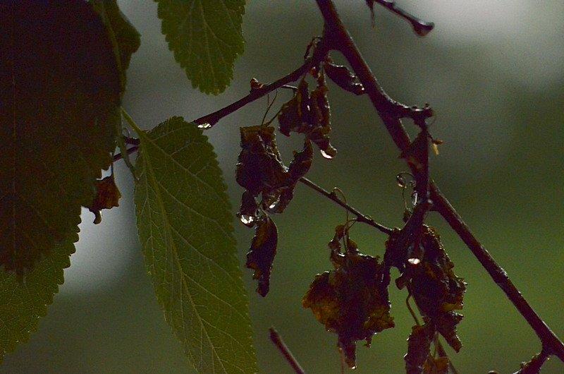 У природы нет другой погоды: Одессу накрыл мощный ливень (ФОТО), фото-16