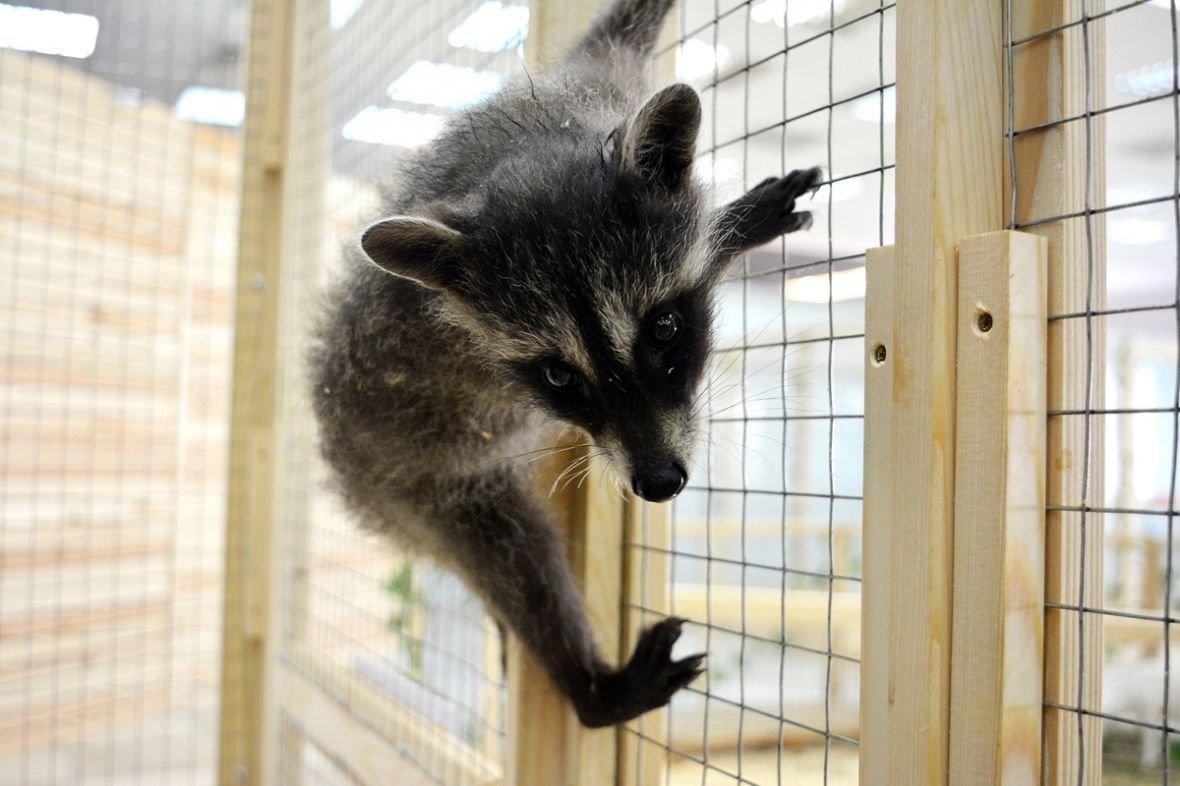 Кто такие Бонни и Клайд, или Почему стоит посетить контактный зоопарк в Новополоцке?, фото-2