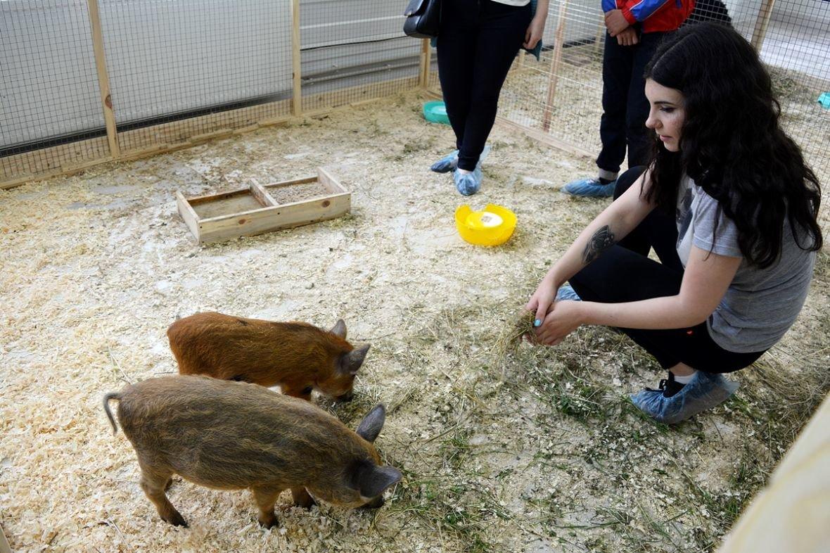 Кто такие Бонни и Клайд, или Почему стоит посетить контактный зоопарк в Новополоцке?, фото-13