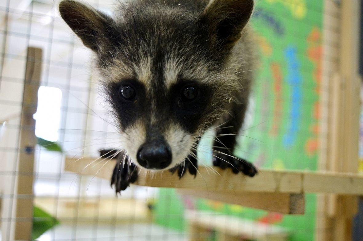 Кто такие Бонни и Клайд, или Почему стоит посетить контактный зоопарк в Новополоцке?, фото-14