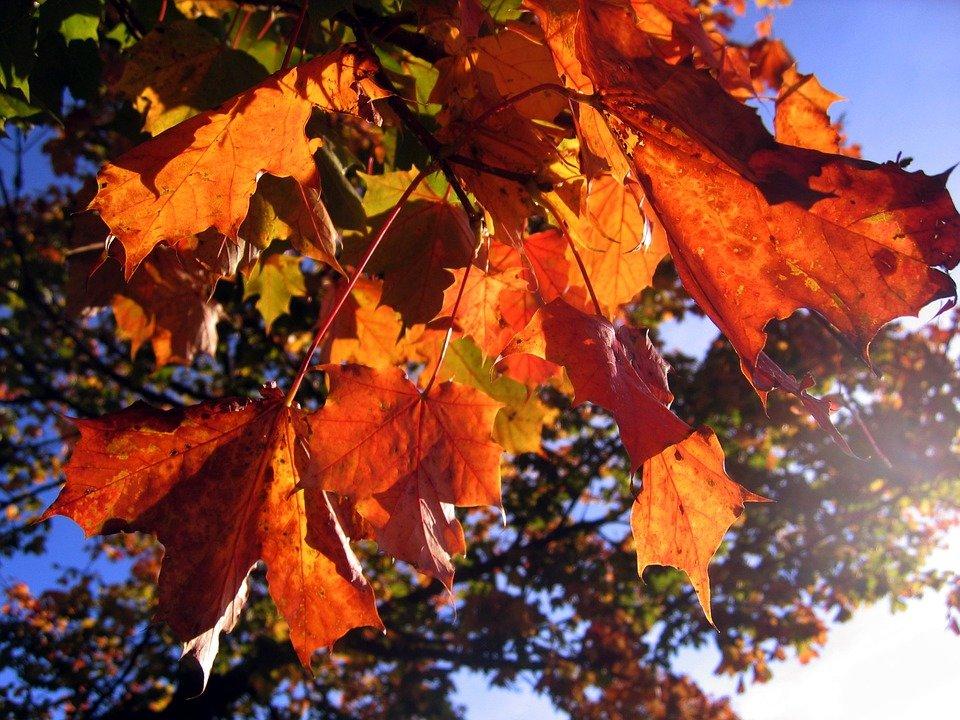leaves-578903_960_720