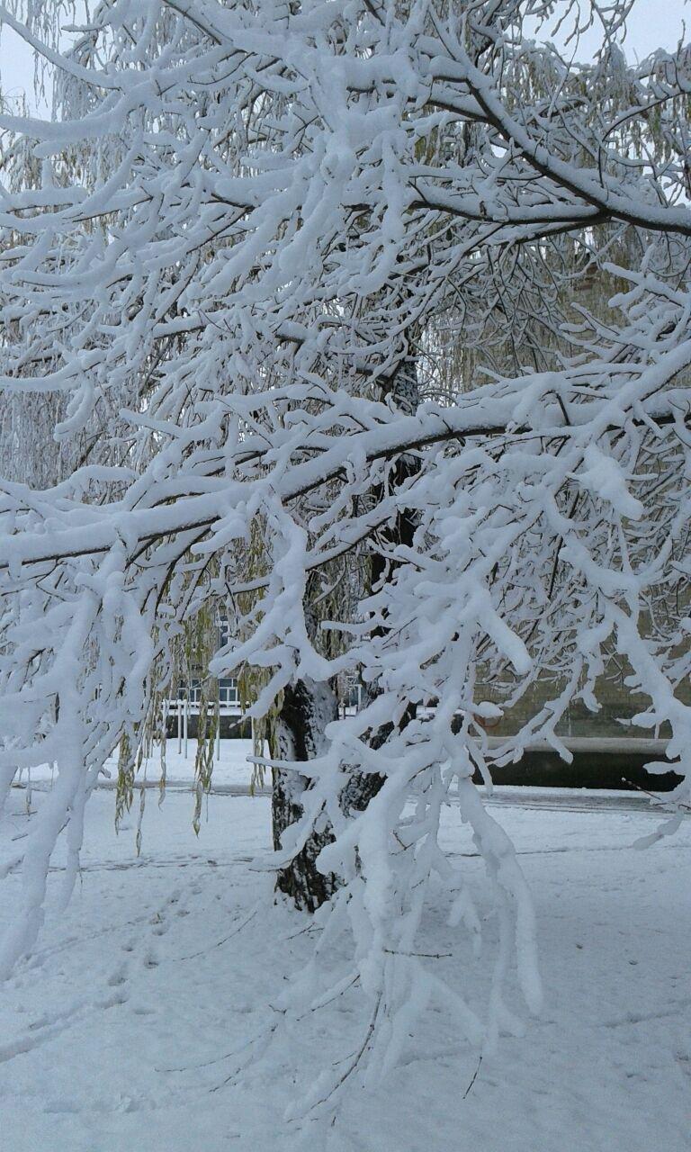 Авдеевка оделась в зимний наряд (ФОТОФАКТ), фото-4