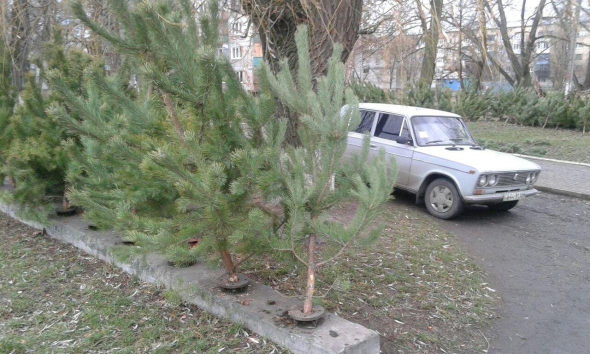 Сколько стоит новогодняя елка в Авдеевке?, фото-2