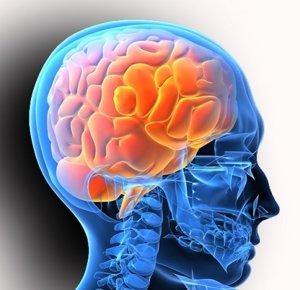 neurology-1