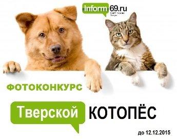 Конкурс1 - котопес1 345