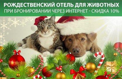 Отель-для-Животных-НГ2