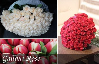 Gallant-Rose (1)