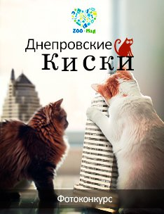 056_ContestImage_234x304_Kisky