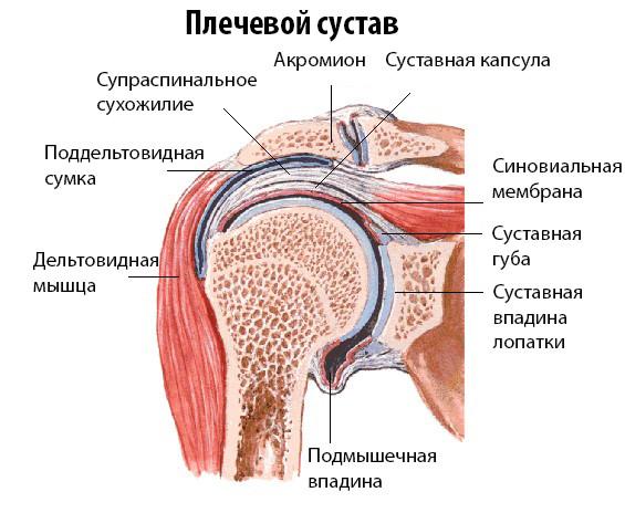 Ударно-волновая терапия и заболевания плечевого сустава