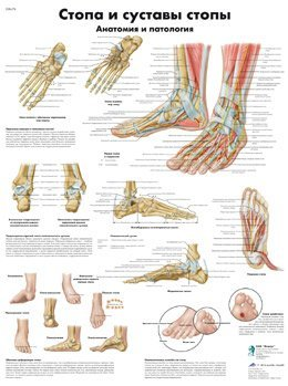 ZVR6176L_01_Foot-and-Joints-of-Foot-Chart-Anatomy-and-Pathology