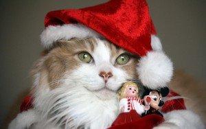 Новогодний-кот-32