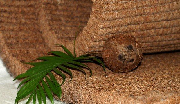 kokosova koyra u L'vovi