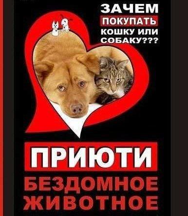 помощь животным2