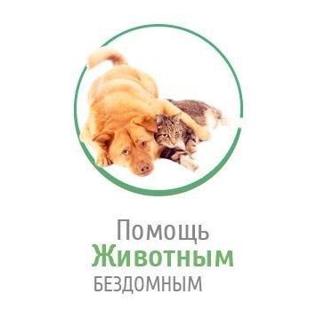 Зооволонтеры Чернигова