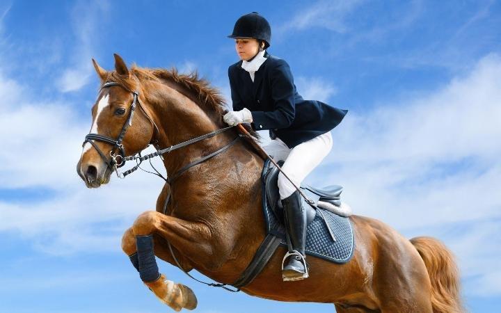 Кони, лошади, прогулки, обучение в Кременчуге