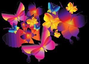 butterfly-300x215