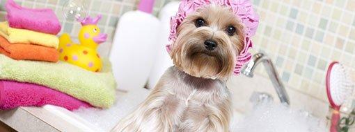 commondog_grooming