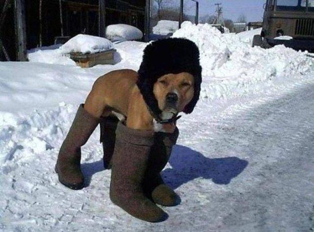 К зиме готов!