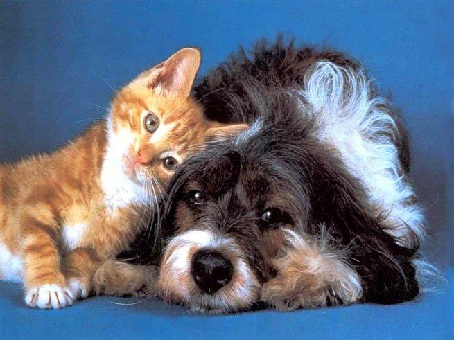 Animals_Dogs__001967_1