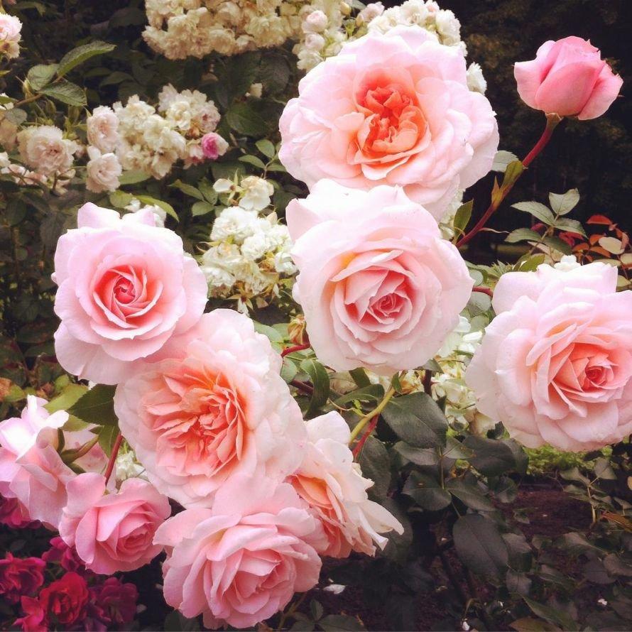 Розовый павильон в Павловске5