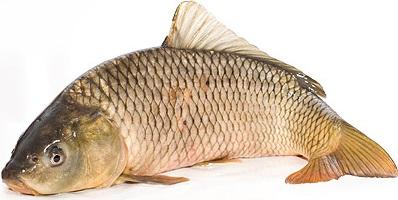ryba-optom-karp