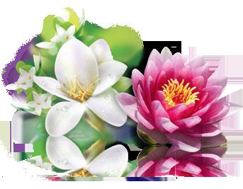 visual-flower