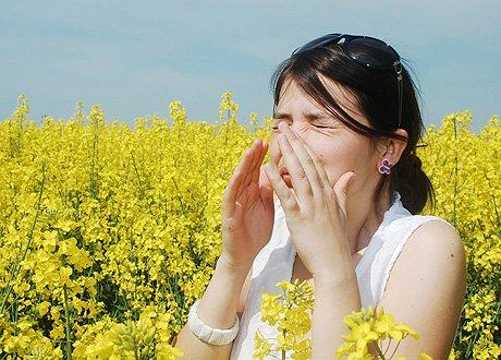 Алерг